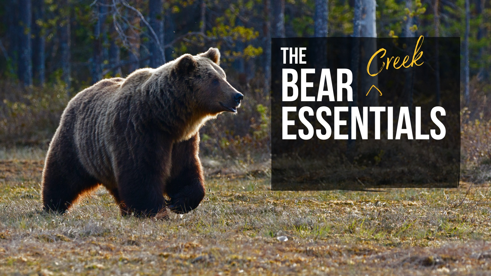 Cover Art for The Bear [Creek] Essentials